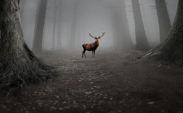 add deer