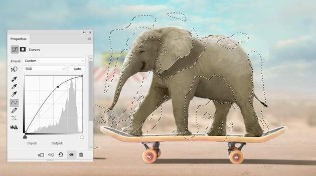 elephant curves 1