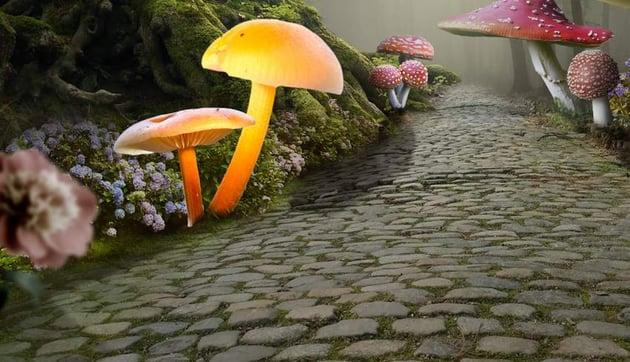 add mushrooms 7