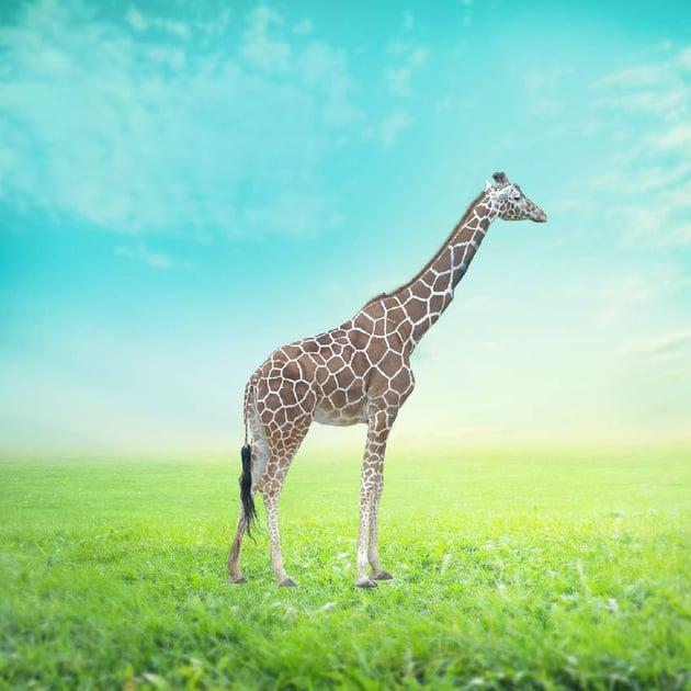 add giraffe