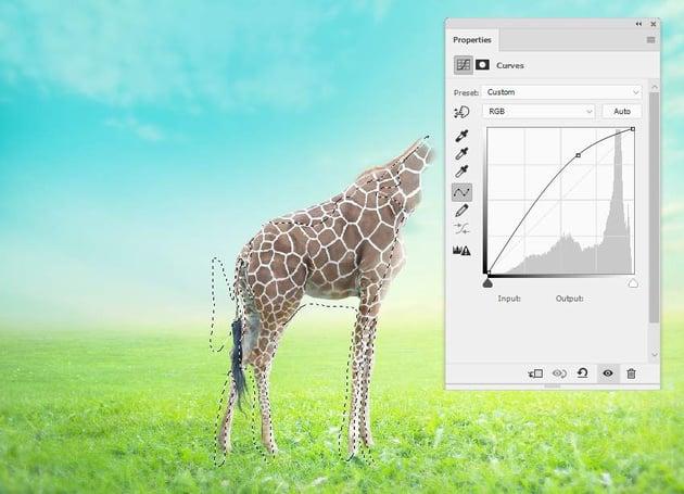 giraffe curves