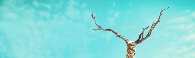 branches masking
