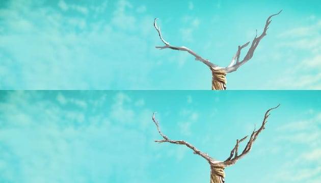 branches DB