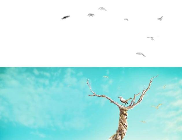 birds 2 curves masking