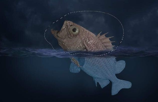 fish color fill masking