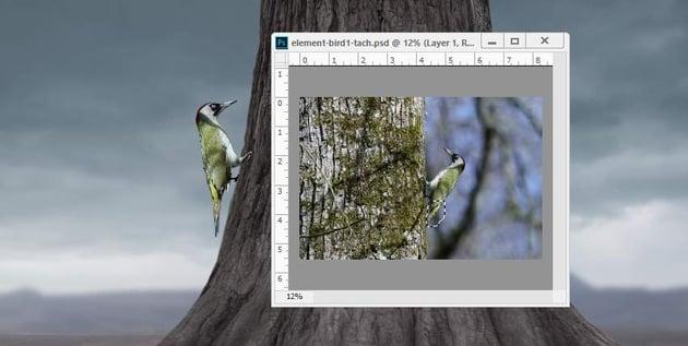 add bird tail