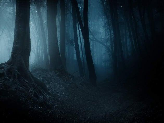 fantasy digital art - forest D and B overlay mode