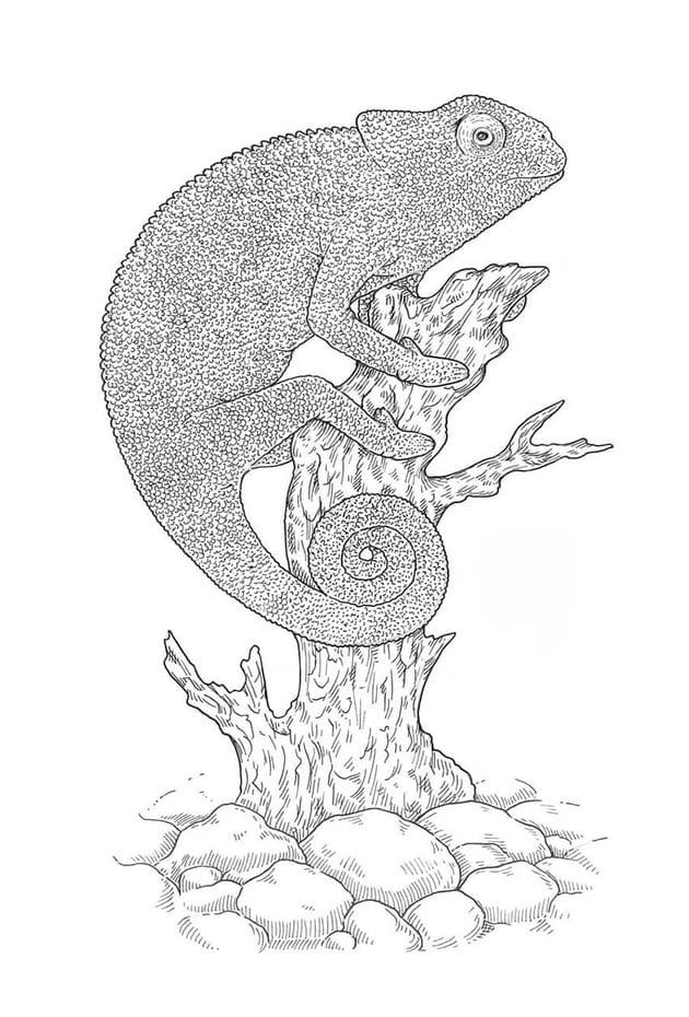 Refining the eye of the lizard