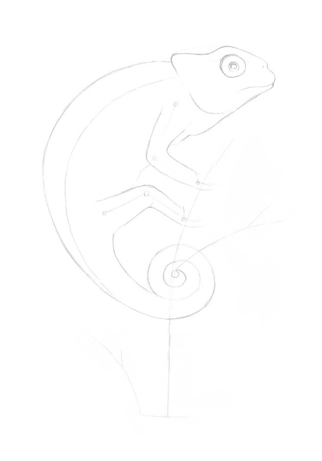 Drawing the body of the lizard