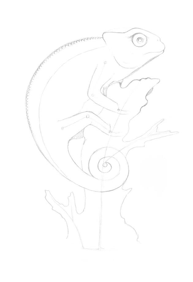 Marking the hidden back limbs of the lizard