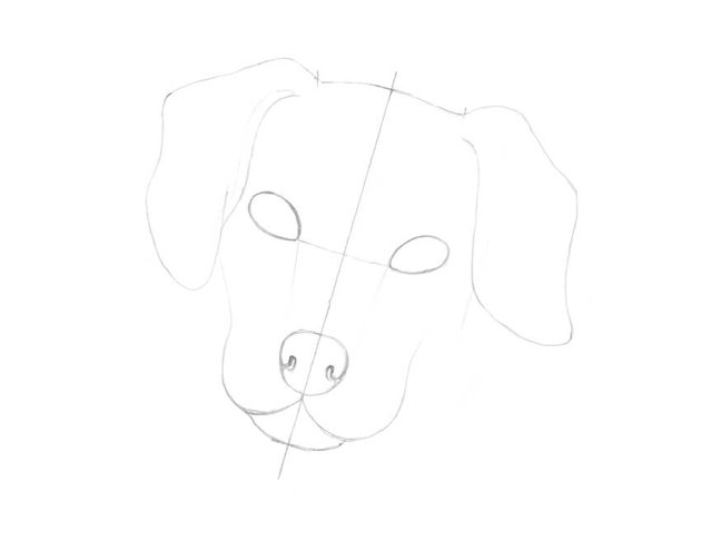 Drawing the ears