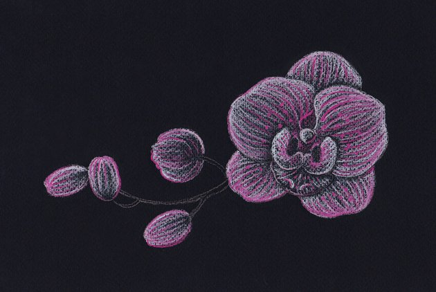 Adding nuances with the pink pencil
