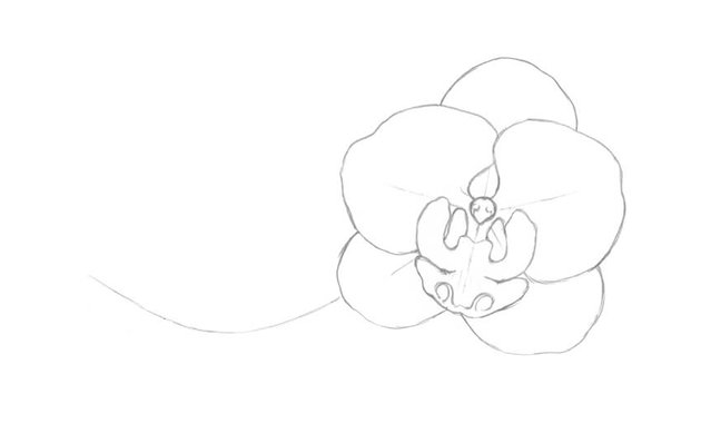 Drawing the sepals