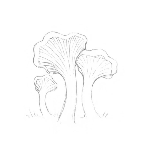 Refining the caps of the mushrooms