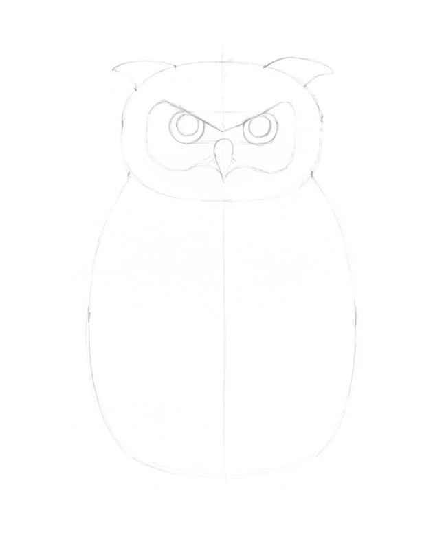 Refining the facial disk of the owl
