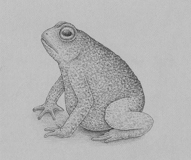 Adding dots to the limbs of the frog