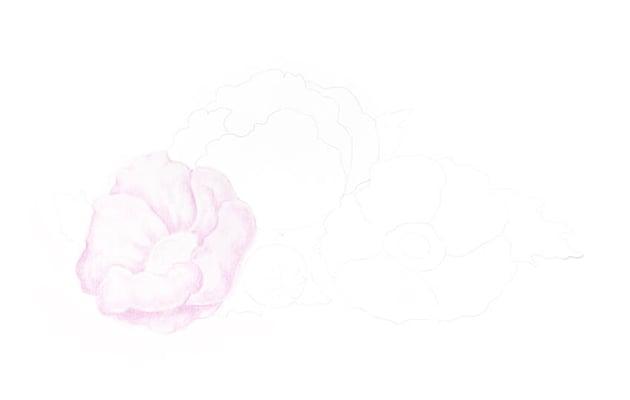 Applying the lilac pencil