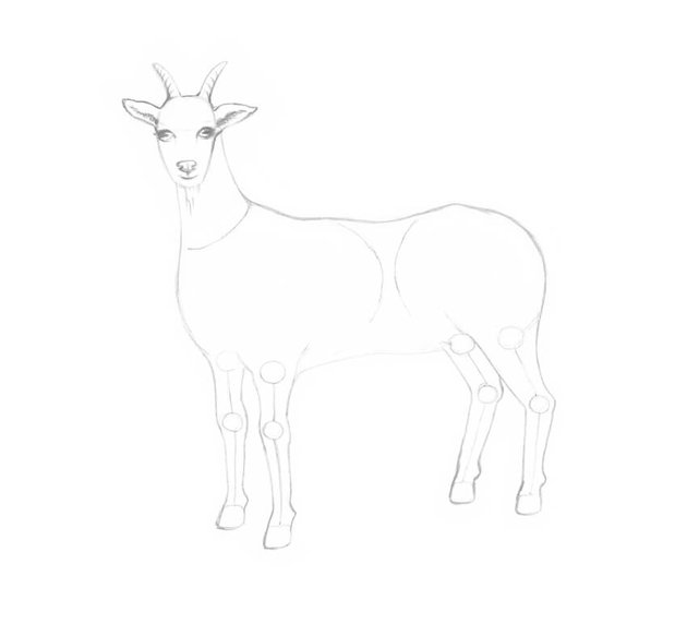 Drawing the beard and refining the horns