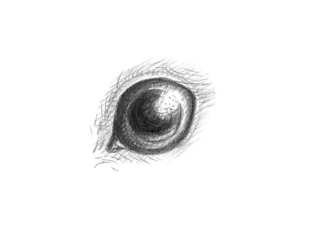 An illustration of the rabbit eye