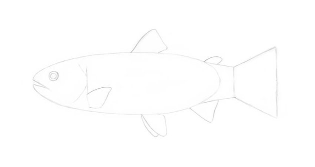Adding the pectoral fin
