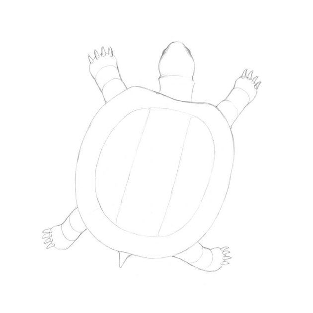 Drawing a new figure inside the shape of the shell