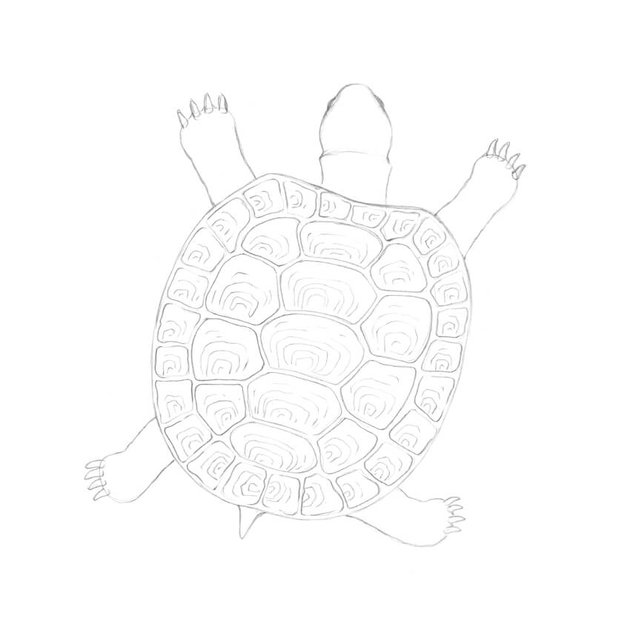 Adding the pattern of the scutes