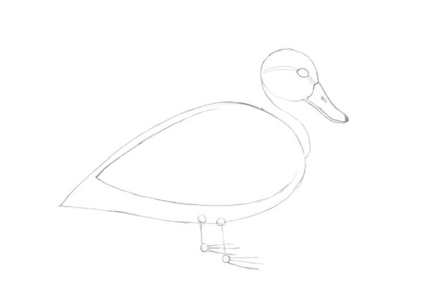 Adding the details to the head and beak