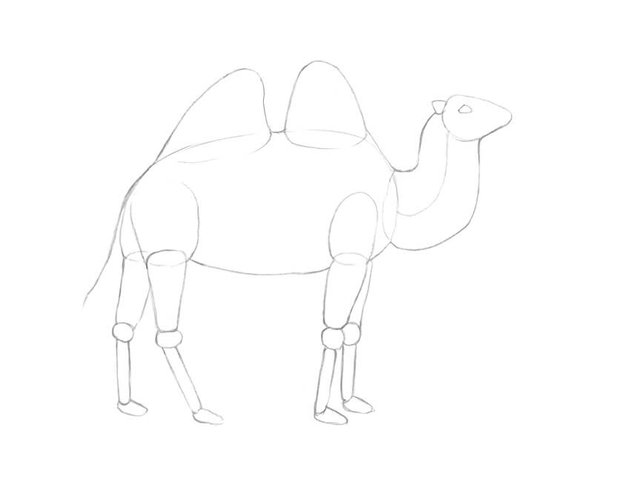 Drawing the framework of limbs