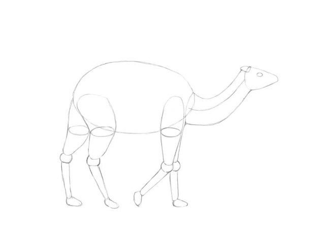 Drawing the neck