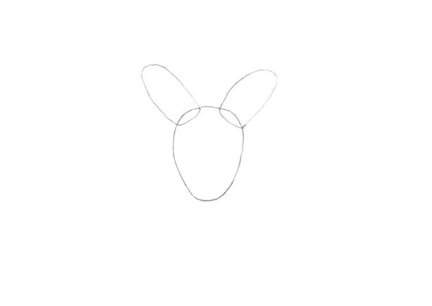 Drawing the shape of the head with the ears
