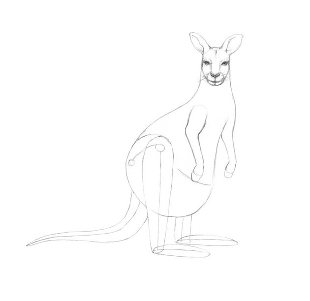 Refining the arms of the kangaroo