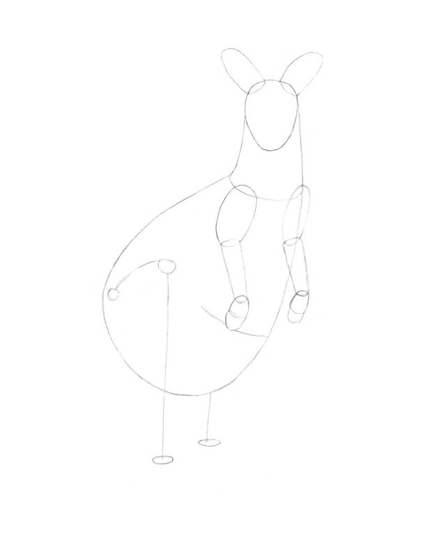 Drawing the framework of the hind limbs