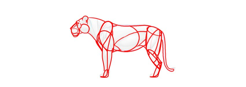 lion muscles simplified