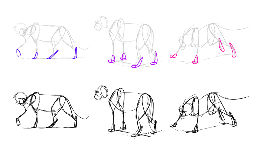 how to draw lion paws