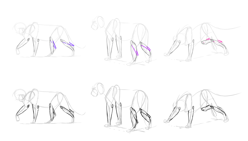 how to draw lion achilles tendon
