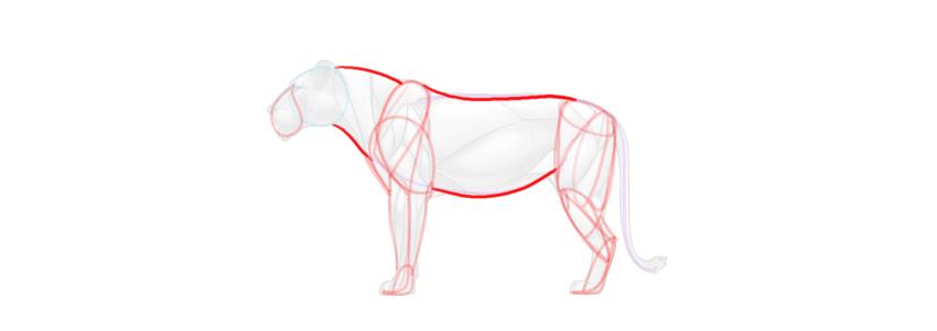 lion body simplified