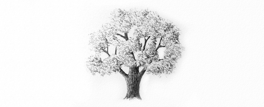 how to shade tree crown