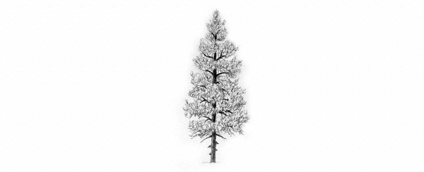 how to draw needle evergreen tree texture