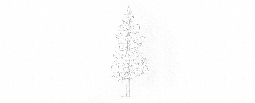 how to draw pine tree trunk