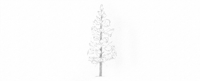 how to shade pine tree trunk