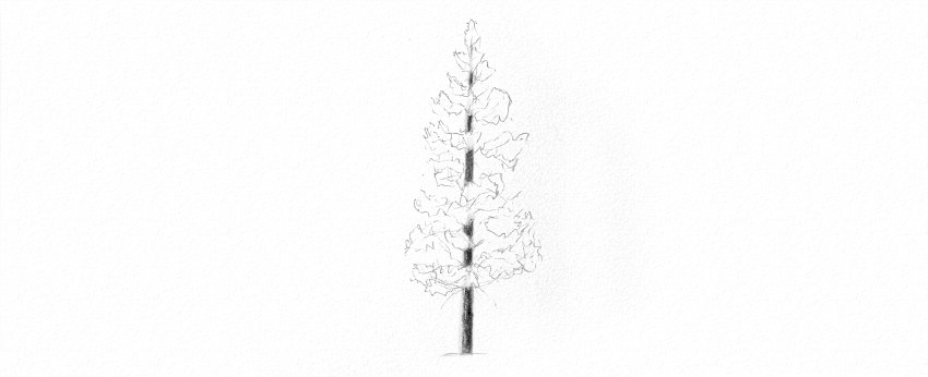 how to shade pine tree trunk with pencils