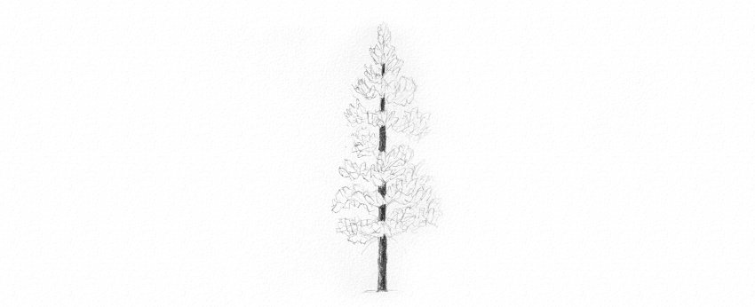 how to draw pine tree needles