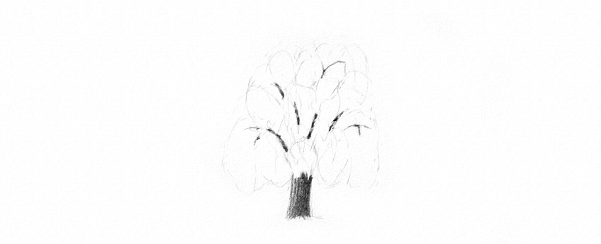how to shade weeping willow trunk