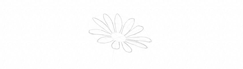 how to draw daisy finish petals horizontal