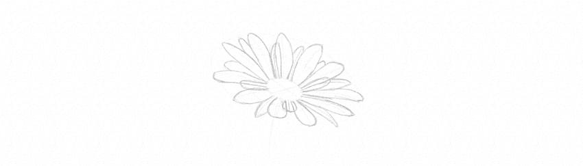 how to draw daisy small petals