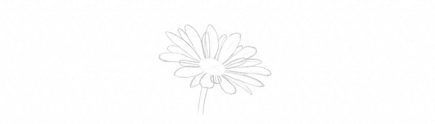 how to draw daisy stem