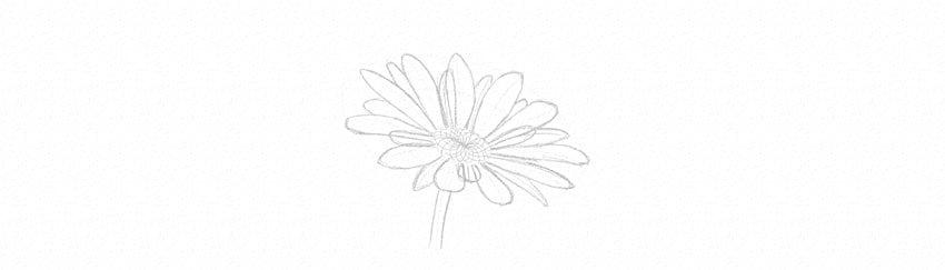 how to draw daisy middle