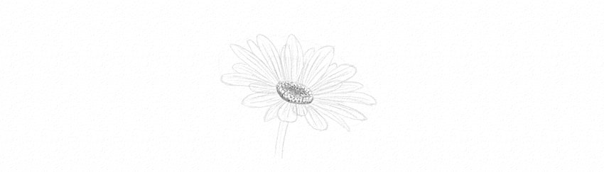 how to shade diasy petals
