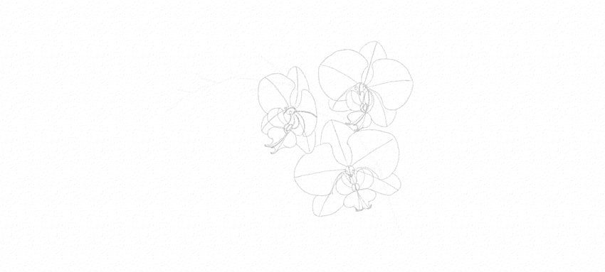 how to draw orchid petals