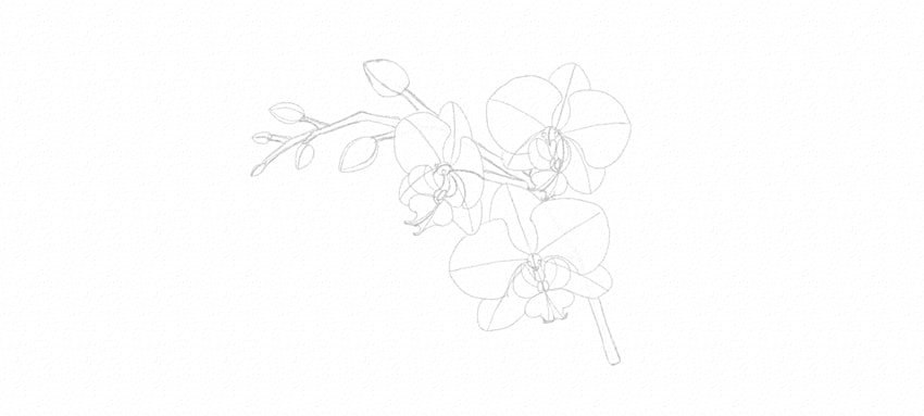 how to draw orchid stem